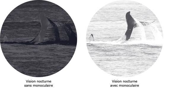 exemple de l'amélioration de la vision nocturne